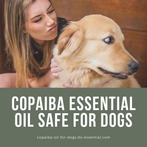Copaiba essential oil safe for dogs