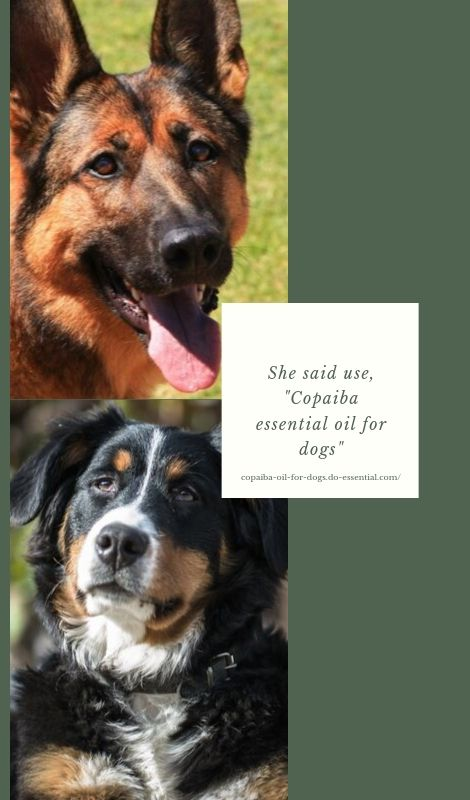 Copaiba essential oil for dogs