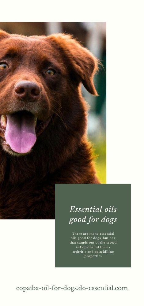 Essential oils good for dogs